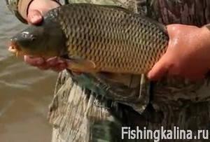 Рыбалка на карпа поплавочной удочкой