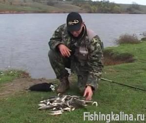 Рыбалка на окуня осенью