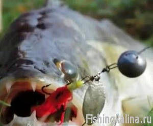 Ловить судака осенью на вилейском водохранилище