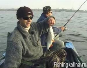 Рыбалка на живца - уловистый способ ловли на донку