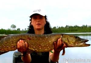Троллинг на хищную рыбу