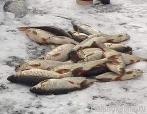 Зимняя рыбалка на плотву со льда