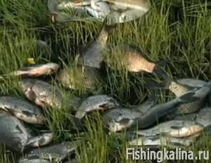 Диалоги a рыбалке про карася
