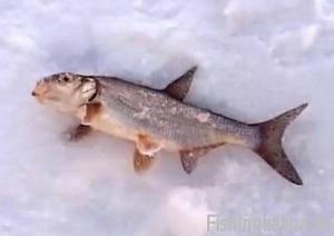 Рыбалка в Тульской области на поддуста