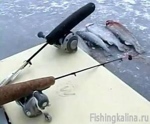Платная рыбалка зимой - ловля форели