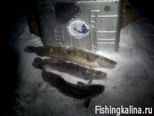 наживка для толстолобика в рыбном месте