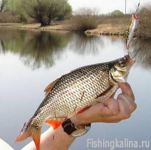 Рыбалка в Астраханской области - ловля красноперки