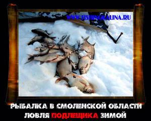 Ловля подлещика зимой на рыбалке в Смоленской области