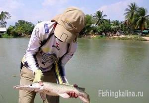 Рыбалка в Таиланде на платнике