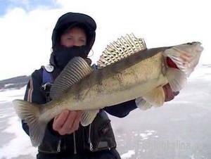 Рыбалка зимой на волжского судака