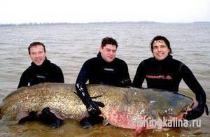 Подводная рыбалка летом на сома