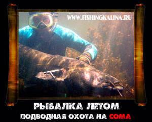 Подводная охота на сома летом