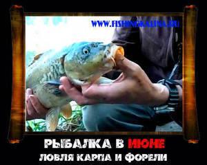 Рыбалка в июне на карпа