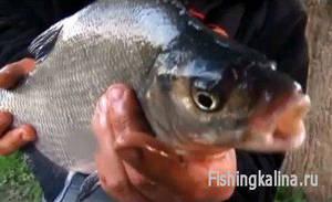 Рыбалка летом на леща с мормышкой на удочку