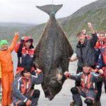Рыба палтус в Норвегии трофей