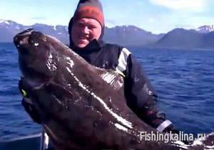 Ловля в Норвегии рыбы палтус