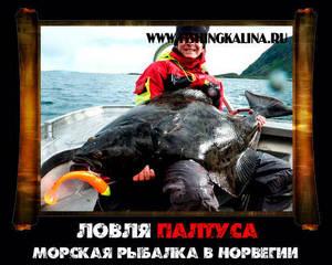 Морская ловля палтуса на рыбалке в Норвегии