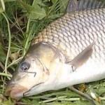 Фидерная рыбалка на карпа с волосяной оснасткой