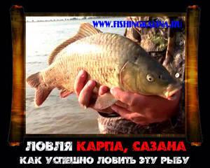 Карпфишинг - ловля карпа