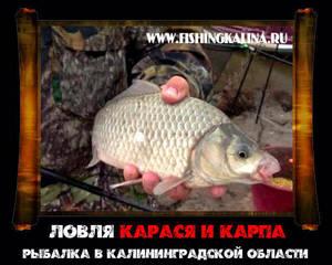 В Калининградской области рыбалка на карася и карпа