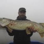 Ловля хищной рыбы в Саратовской области спиннингом