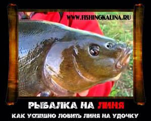 Рыба линь ловля