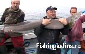 Морской угорь конгер