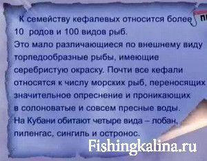 Кефалевые рыбы