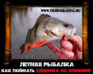 Летняя рыбалка на спиннинг по окуню