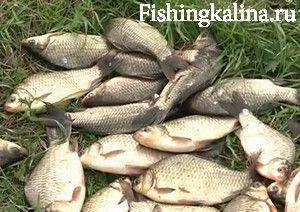 прикормка для рыбы в мае