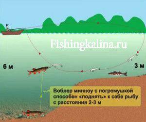 Шарики в воблере minnow способны привлечь рыбу с трех метров