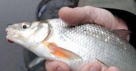 Успешная рыбалка на рыбца осенью
