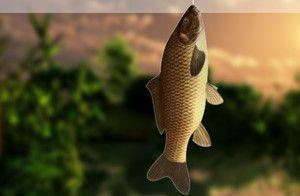 Игра рыбалка на озере на поплавочную удочку играть