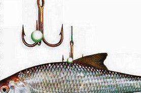 Как наживить рыбку для ловли щуки на живца за спинку