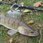 Джиговая рыбалка на судака осенью советы